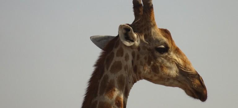 Etosha Nationalpark – Windhoek – Ghanzi