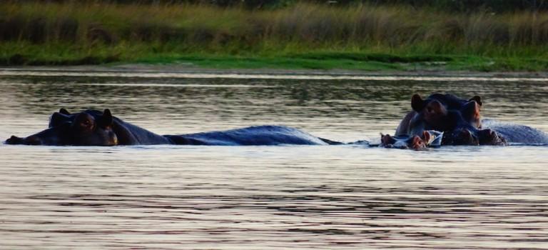 Jungle Junction – mitten im Okawango Delta