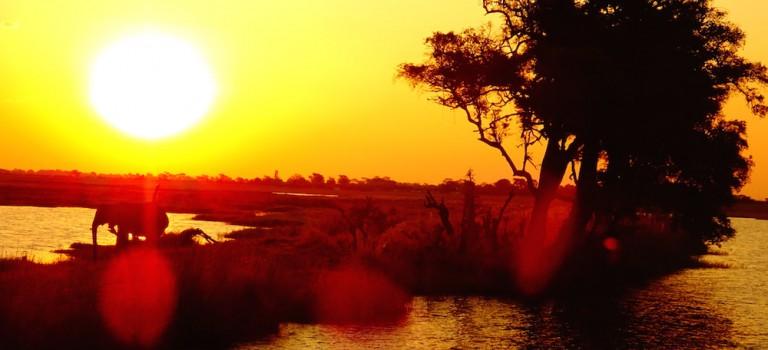 Noch mehr Tiere im Chobe Nationalpark
